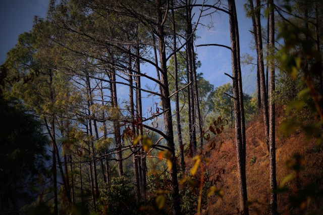 forests of Sattal